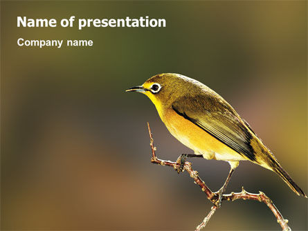 Bird PowerPoint Template, 02186, Nature & Environment — PoweredTemplate.com