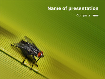 Sitting Fly PowerPoint Template, 02235, Nature & Environment — PoweredTemplate.com