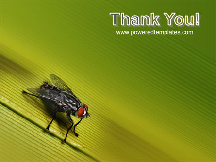 Sitting Fly PowerPoint Template Slide 20