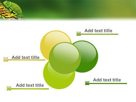 Chameleon Lizard PowerPoint Template Slide 10