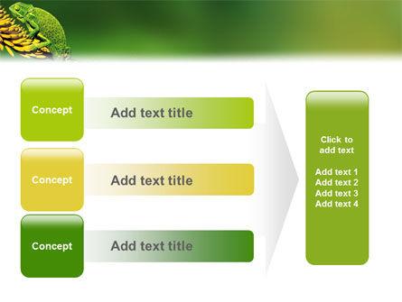 Chameleon Lizard PowerPoint Template Slide 12