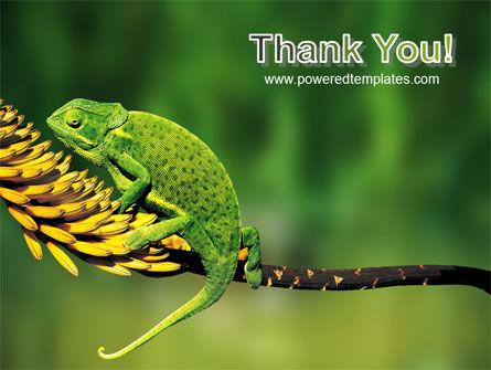 Chameleon Lizard PowerPoint Template Slide 20