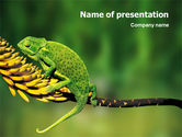 Animals and Pets: Chameleon Lizard PowerPoint Template #02243