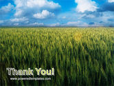 Grain PowerPoint Template#20