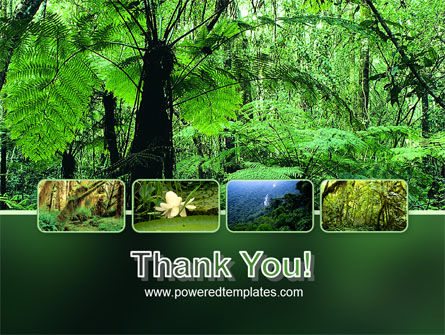 Tropical Forest PowerPoint Template Slide 20