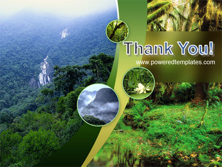 Rainforest PowerPoint Template Slide 20