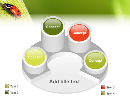 Lady-beetly PowerPoint Template Slide 12