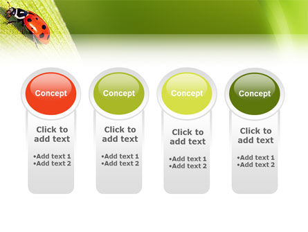 Lady-beetly PowerPoint Template Slide 5