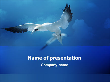 Albatross PowerPoint Template, 02459, Nature & Environment — PoweredTemplate.com