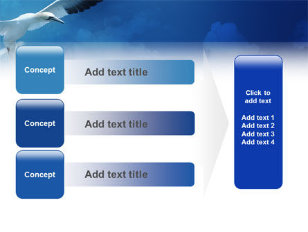 Albatross PowerPoint Template Slide 12