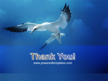 Albatross PowerPoint Template Slide 20