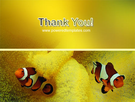 Tropical Fish PowerPoint Template Slide 20