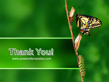 Butterfly And Caterpillar PowerPoint Template Slide 20