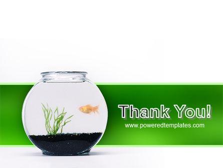 Aquarium Fish PowerPoint Template Slide 20