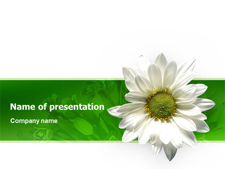 Nature & Environment: Ox-eye Daisy PowerPoint Template #02533