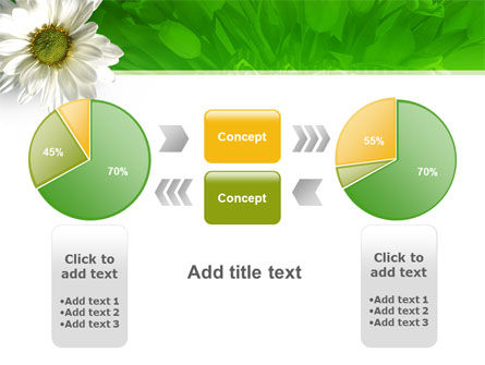 Ox-eye Daisy PowerPoint Template Slide 11