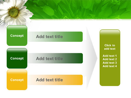 Ox-eye Daisy PowerPoint Template Slide 12