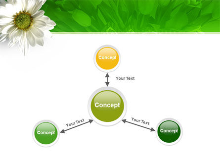 Ox-eye Daisy PowerPoint Template Slide 14