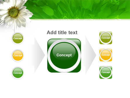Ox-eye Daisy PowerPoint Template Slide 17