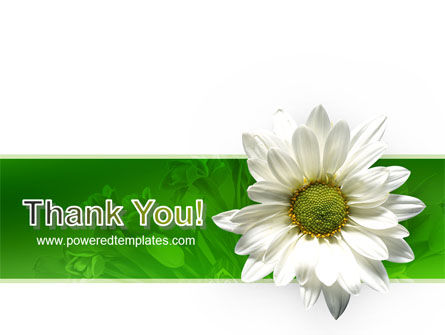 Ox-eye Daisy PowerPoint Template Slide 20
