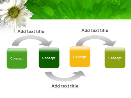 Ox-eye Daisy PowerPoint Template Slide 4