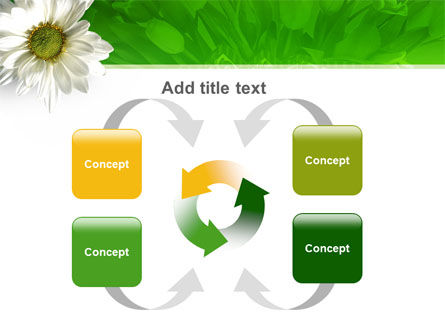 Ox-eye Daisy PowerPoint Template Slide 6
