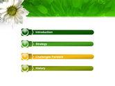 Ox-eye Daisy PowerPoint Template#3