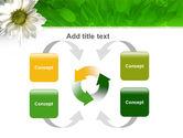 Ox-eye Daisy PowerPoint Template#6