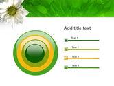 Ox-eye Daisy PowerPoint Template#9