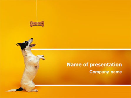 Pet PowerPoint Template, 02559, Animals and Pets — PoweredTemplate.com