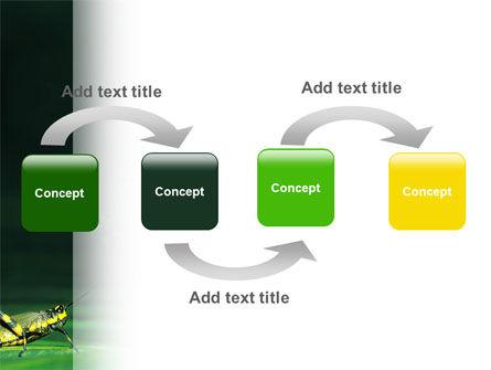 Grasshopper PowerPoint Template, Slide 4, 02690, Animals and Pets — PoweredTemplate.com