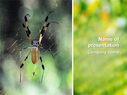 Animals and Pets: Spider PowerPoint Template #02704