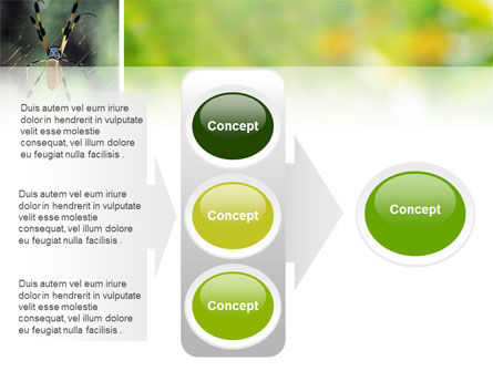 Spider PowerPoint Template Slide 11