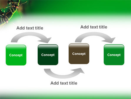 Ants PowerPoint Template, Slide 4, 02718, Nature & Environment — PoweredTemplate.com