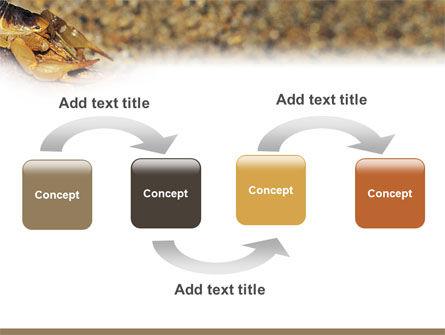 Desert Hairy Scorpion PowerPoint Template, Slide 4, 02731, Animals and Pets — PoweredTemplate.com