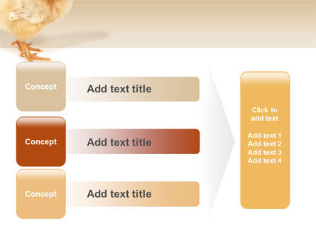 Chicken PowerPoint Template Slide 12