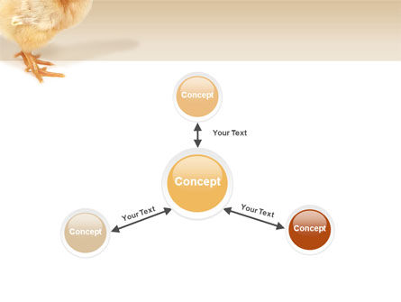 Chicken PowerPoint Template Slide 14
