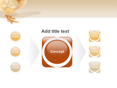Chicken PowerPoint Template Slide 17