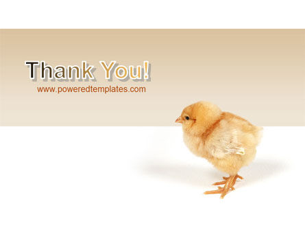 Chicken PowerPoint Template Slide 20