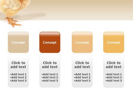 Chicken PowerPoint Template Slide 5