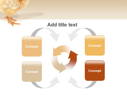 Chicken PowerPoint Template Slide 6