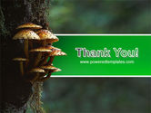 Fungi In The forest PowerPoint Template#20
