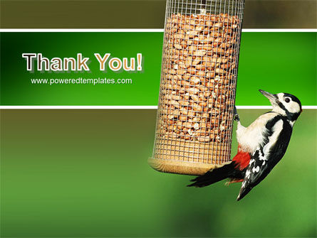 Birdfeeder PowerPoint Template Slide 20