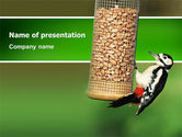 Nature & Environment: Birdfeeder PowerPoint Template #02796