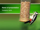 Nature & Environment: Modello PowerPoint - Mangiatoia per uccelli #02796