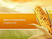 Agriculture: Corn Thanksgiving Free PowerPoint Template #02821