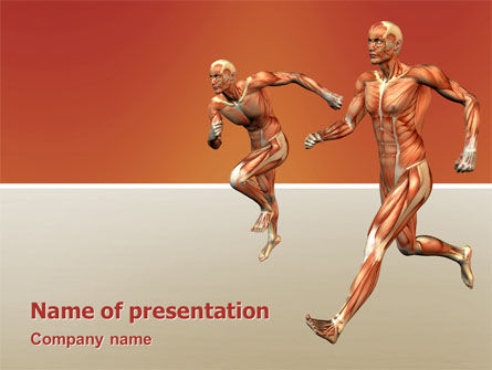 Muscular System PowerPoint Template, 02911, Medical — PoweredTemplate.com