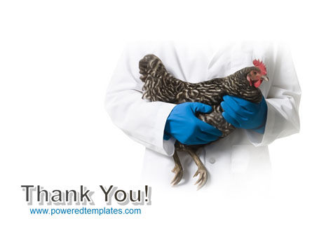 Hen PowerPoint Template Slide 20