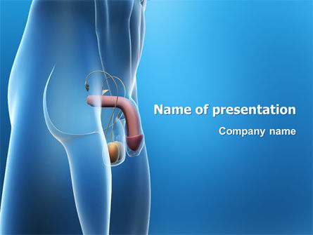 Male Reproductive Organs PowerPoint Template, 03223, Medical — PoweredTemplate.com