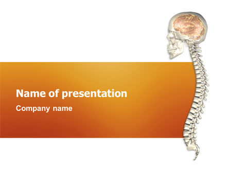 Medical: Spinal Cord PowerPoint Template #03254